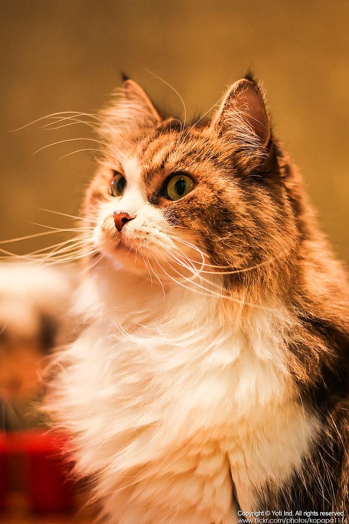 元氣貓主題餐廳 IMG_6169