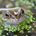 Frog Portrait by charlie.syme