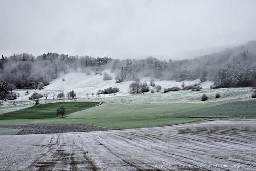 trees mist green beautiful fog contrast forest schweiz switzerland nebel cloudy sony magic hill felder meadow wiese nebula fields mystical zürich alpha kontrast wald hilly enchanted mystisch winterthur hügel overcastsky zauber hügelig grün schön bäume manuelmartin bewölkt dättnau a99v