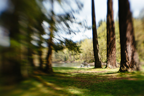 trees blur nature lensbaby canon washington pacificnorthwest noltestatepark canoneos5dmarkiii