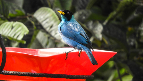 Colombia_BirdFair_2017_051