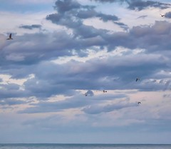Seagulls, clouds and Lake Erie - Lakeshore Reservation