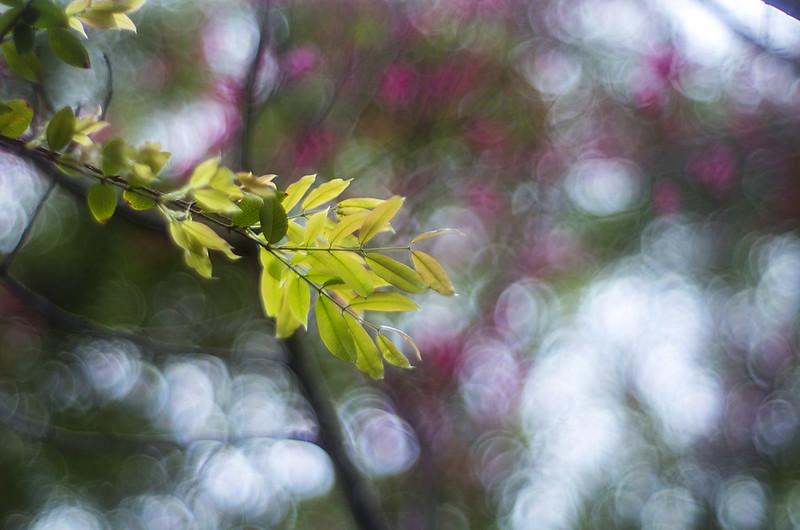 smc Pentax M 50mm f/1.4