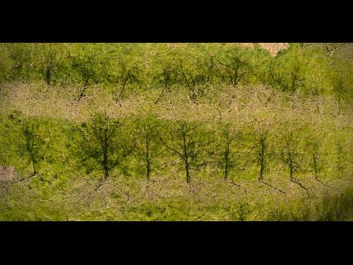 Plantacion manzanos
