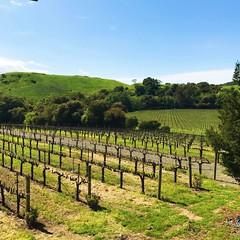 Wine o'clock! . . . #napavalley #sonomavalley #springbreak #california #SF #sanfrancisco #winelovers #abmlifeiscolorful