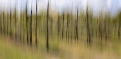 INTENTIONAL CAMERA MOVEMENT by June Hill