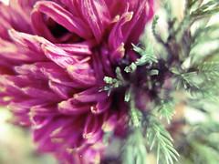 ░ Miss Flower