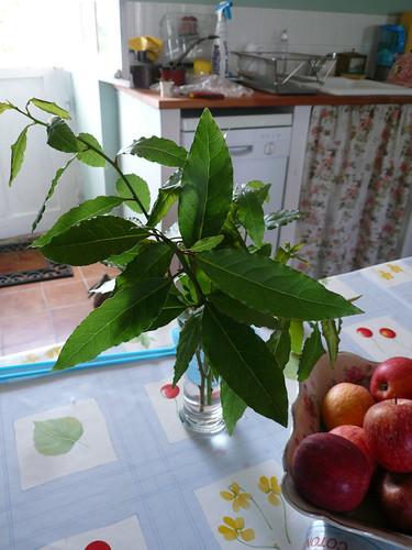 bay leaves on stem