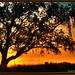 Blue Earth Sunset