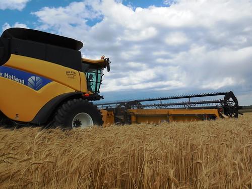 CR cutting in the wheat