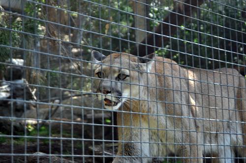 San Diego Zoo #7