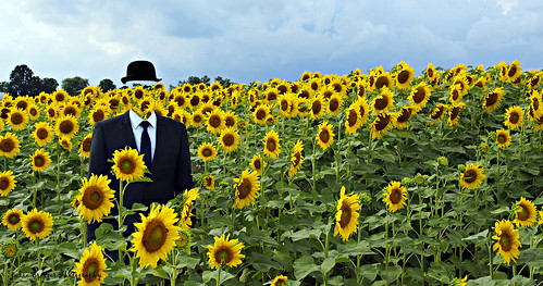 Sunflower of man