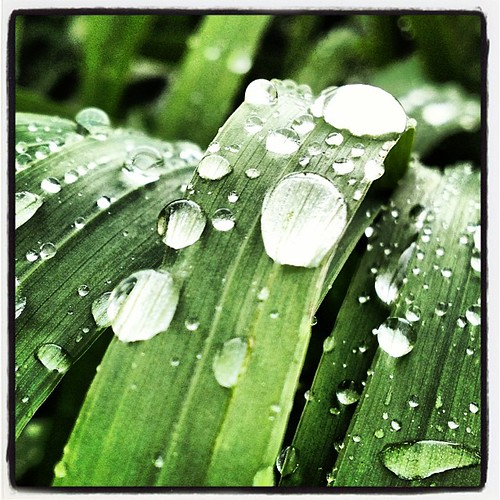 Rain Drops On Grass