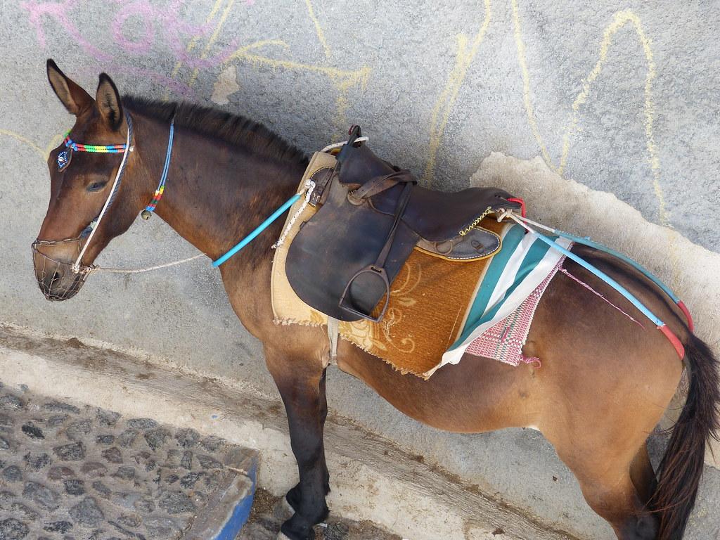 Donkey, Santorini