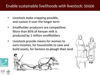 Ensure sustainable livelihoods with livestock