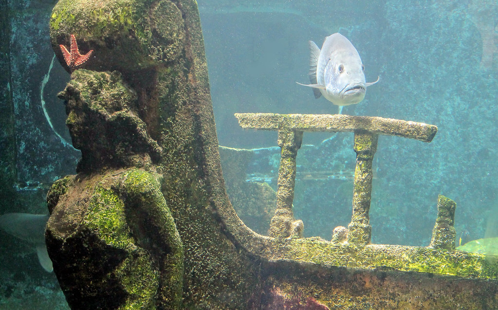 "Fish with ""Sunken Ship"", Arecibo Aquarium"