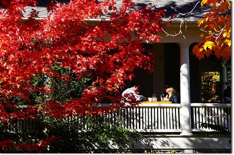 Sugar maple in Fall, Chautauqua, Boulder 6