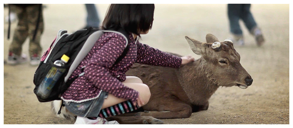 Japanese School Girl Fondles a Sika Deer in Nara – Japan