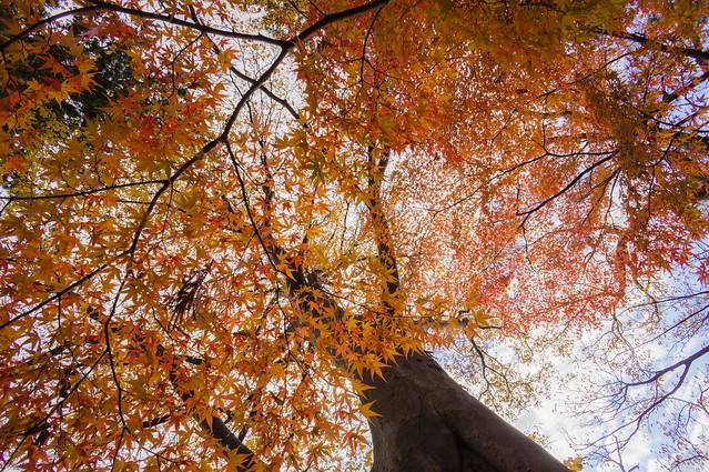 秋の空中戦