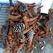 Pile pine cones the squirrel terrorist  have left for us