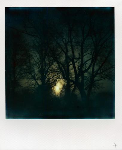 uk trees winter england film cemetery silhouette fog sunrise dark polaroid sx70 gloomy hampshire instant lowkey hursley underexposed impossible polaroidlandcamera sx70alpha1se impossibleproject px680 px680colorshade