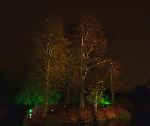 kew-gardens-after-dark-11