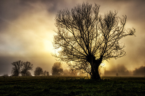 fog nebel baum baggersee reutlingen kirchtentellinsfurt