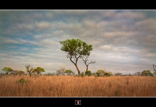 sunrise southafrica bushwalk hdr krugerpark zuidafrika 2013 canon450d mygearandme