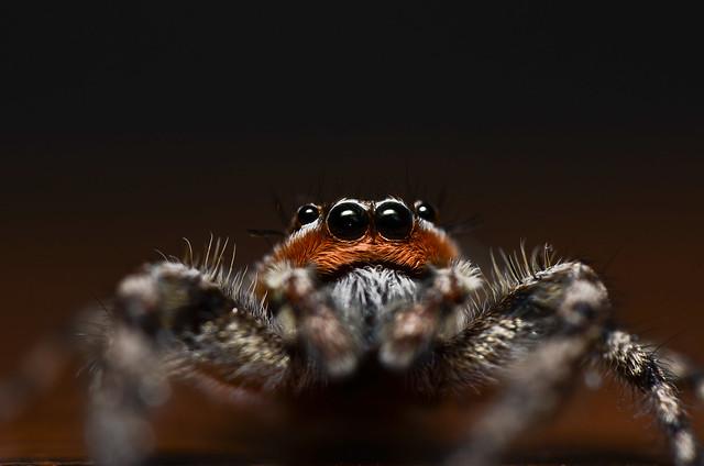 spider, close, macro