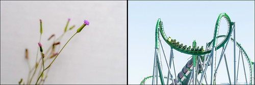 Image of original photos of purple wild flowers and roller coaster