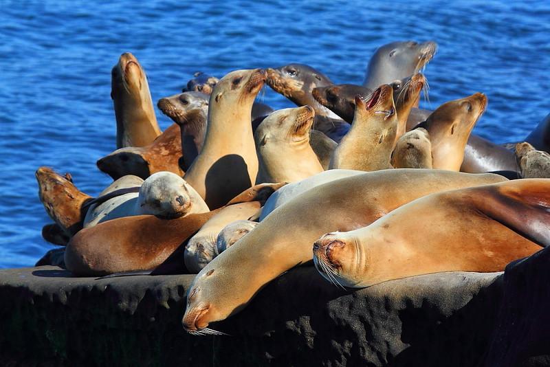 IMG_7669 California Sea Lion