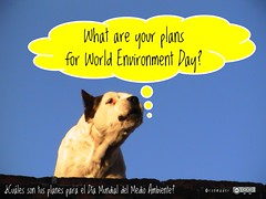 What are your plans for World Environment Day? = ¿Cuáles son sus planes para el Día Mundial del Medio Ambiente?