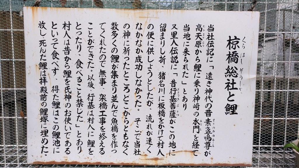 椋橋神社 鯉