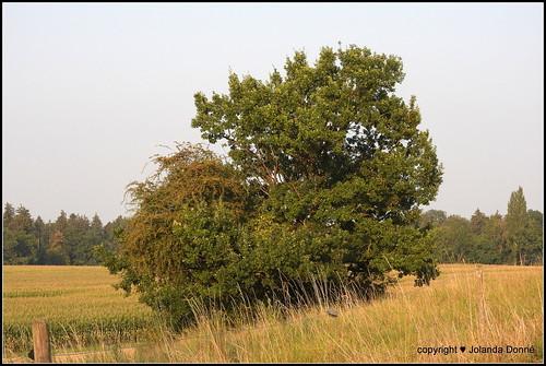 Baum im Spätsommer