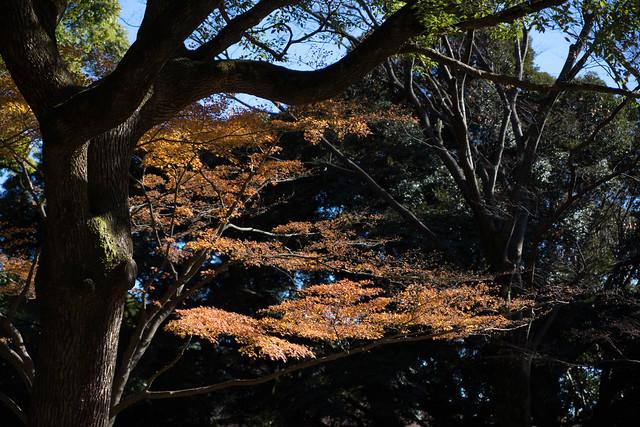 Yoyogi Park,TOKYO, Sony ILCE-7, Tamron SP 24-70mm F2.8 Di USD