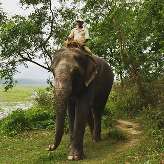 Blessings come in so many shapes and forms 😍🙏🐘 #chitwan #chitwannationalpark #barahijunglelodge #trekking #Nepal #Nepal2017 #Elephant #safari | by pedro.custodio