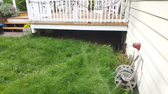 Grass patch and under deck