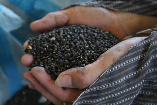 奇美部落種出來的綠黑豆,聽說是台灣傳統種原,連農改場都不知道的品種。