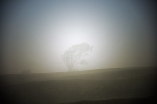 Lonely Tree in the Mist