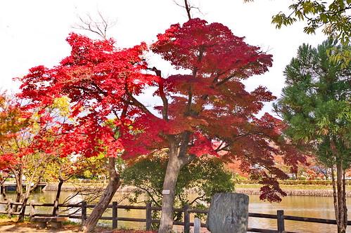 【写真】紅葉 : 長岡天満宮