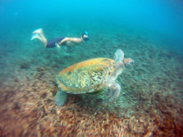 Snorkel en Shark Bay