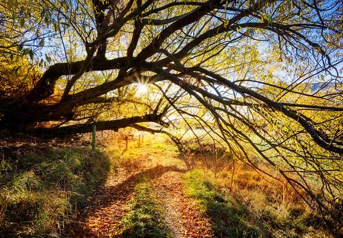 Golden Tree Path