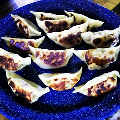 Wild boar pot stickers