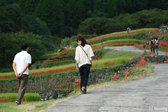 Bansho Rice Terrace