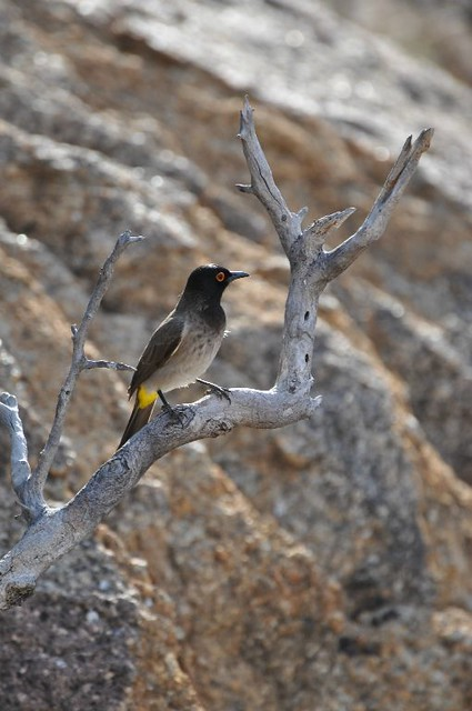 Bird in Namibia