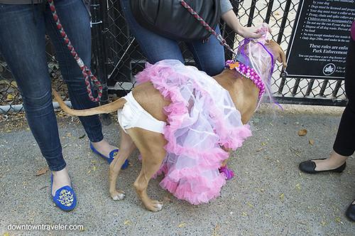 Dog And Human Mix Halloween dog costume_toddlers