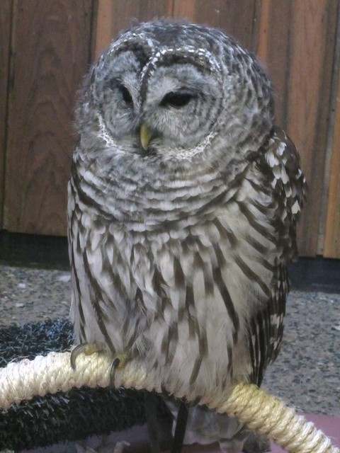 Owl at Nature Center