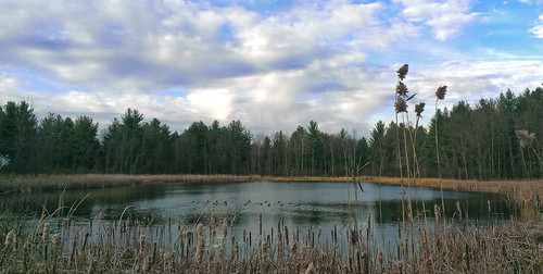 park november autumn fall water pond michigan ducks pines glacial stonycreekmetropark oaklandtownship kettlelake