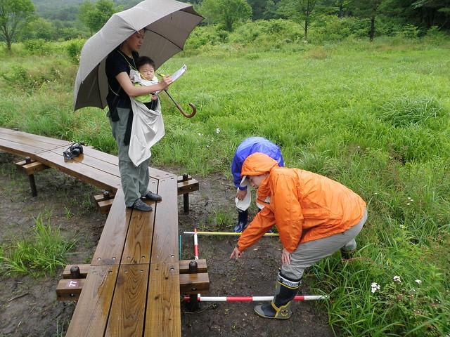 赤ちゃんがいても,木道沿いなら調査に参加できる.