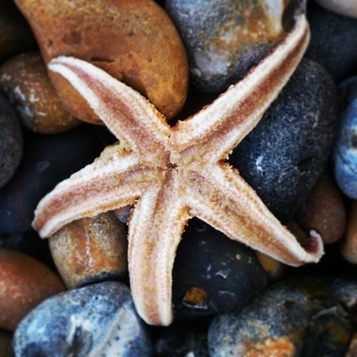 Starfish underside